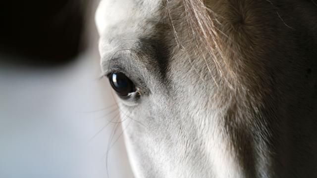 Brandweer redt paard uit sloot