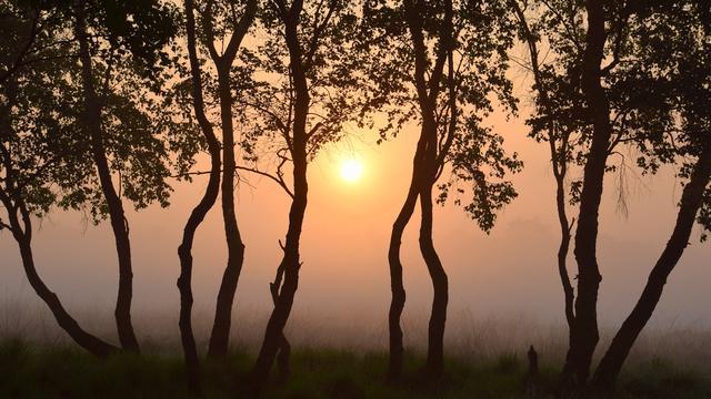 Code geel voor Zeeland en West-Brabant vanwege zeer dichte mist