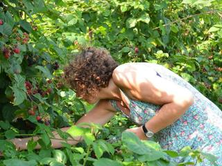 Overzicht van plekken waar je zelf fruit en bloemen kunt plukken