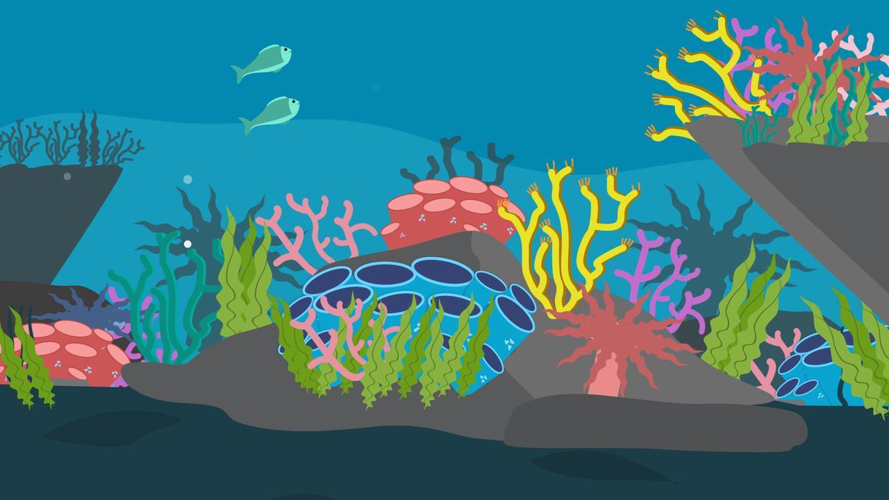 Het koraal sterft uit: Dit zijn de gevolgen
