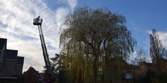 Brandweer redt kat uit Leiderdorpse boom