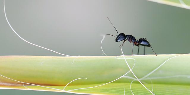 Opvallend veel mieren, vlooien en vliegjes in Nederland deze zomer