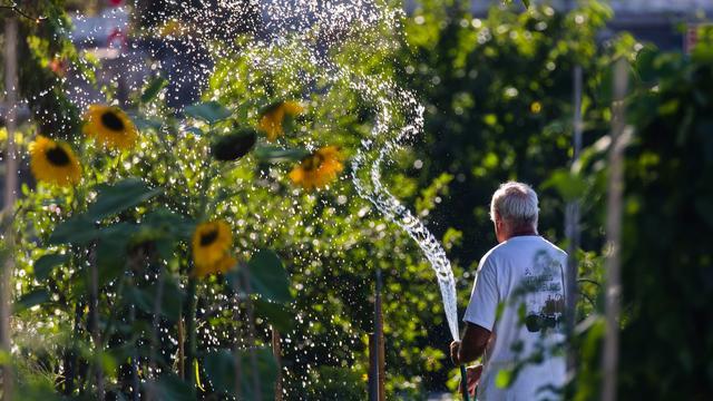 Septemberklussen voor de tuin: snoeien, zaad verzamelen en niet te veel vegen