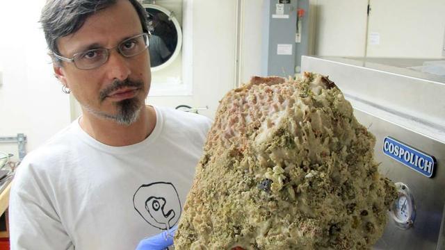 Groot koraalrif ontdekt bij monding Amazone