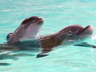Dieren gebruiken onder meer werktuigen om vis te vangen
