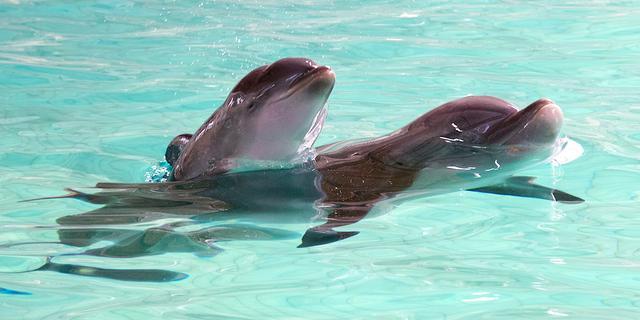 Dolfijnen hebben mogelijk seks voor hun plezier