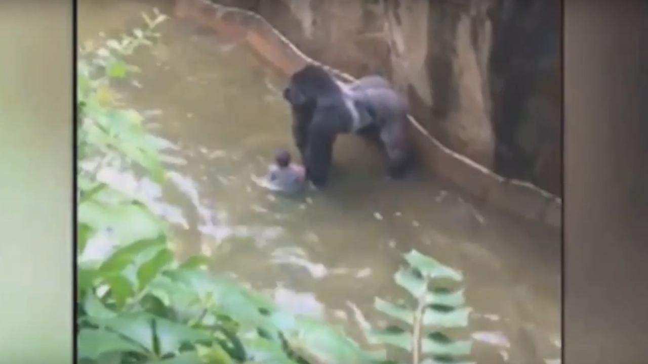 Kleuter valt in gorillaverblijf Ohio