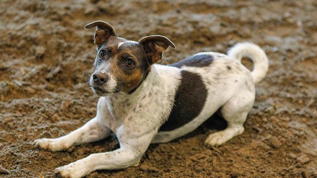 Gestolen hond in Haarlem toch niet gestolen