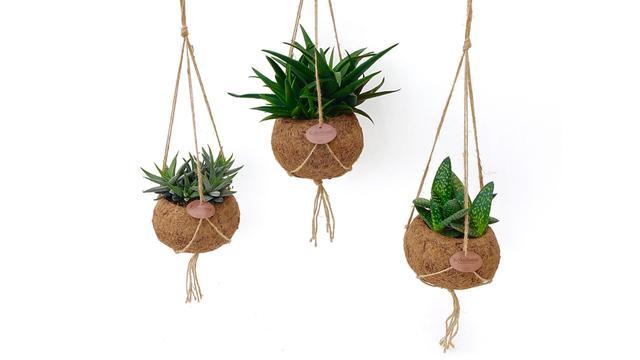 Set van 3 hippe Kokodoma vetplantjes vanaf 22,95