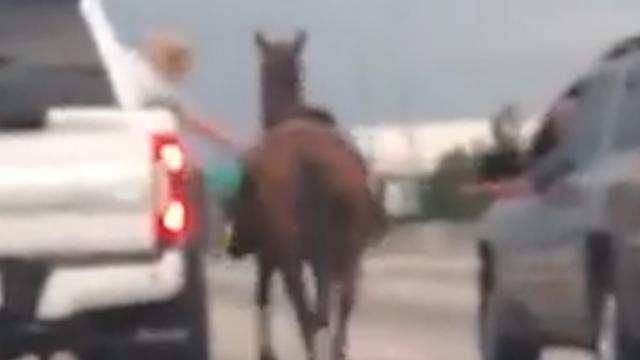 Passagier vangt vanuit rijdende auto paard op snelweg VS