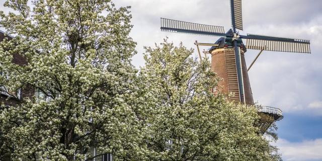 Molen in Utrechtse Adelaarstraat gaat vanaf september weer graan malen