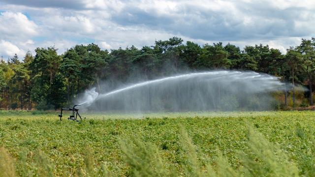 Boeren vrezen voor hitte: 'Dit kan de nekslag zijn voor veel gewassen'