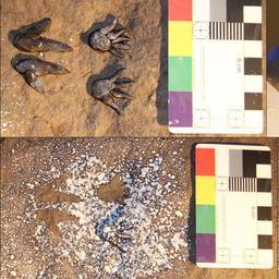 Prehistorische bewoners Australië maakten tekensjablonen van bijenwas