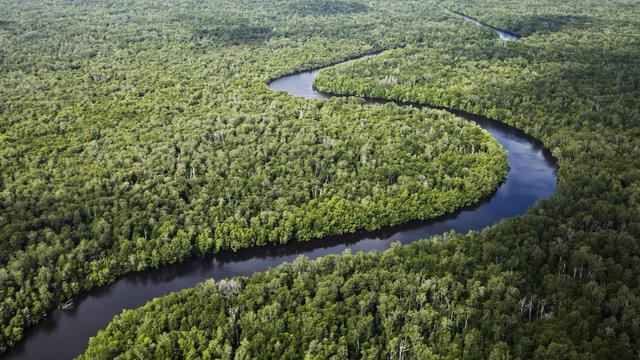 'Struiken verspreiden zich sneller dan bomen door vertakte stammen'