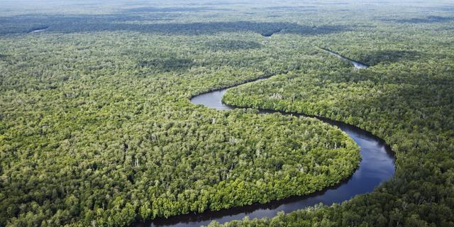 'Amazonegebied gevoeliger voor bosbranden door menselijke activiteit'