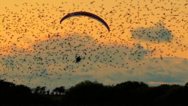 Indrukwekkende beelden van paraglider tussen vogels in Denemarken