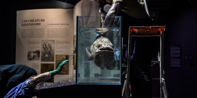 Enorme vis die al sinds prehistorie bestaat kan 100 worden en is 5 jaar zwanger