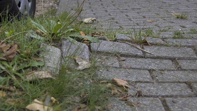 Wortelopdruk maakt kap bomen Haagse Beemden nodig