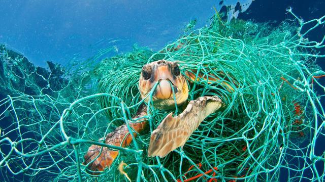 Hoeveel plastic wordt door dieren gegeten?