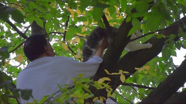 Brandweer helpt eigenaar bij redding van kat uit boom in Slaaghwijk