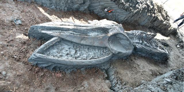 Duizenden jaren oud walvisskelet in zeer goede staat gevonden in Thailand
