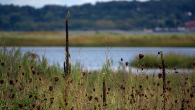 'Riet goed voor zoetwatervoorziening deltagebied'