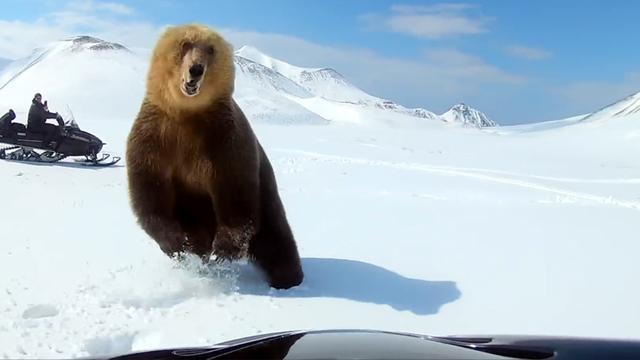 Rus op sneeuwscooter ontsnapt aan klauwen van enorme beer