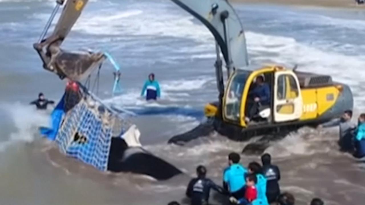 Argentijnse marine redt orka met graafmachine