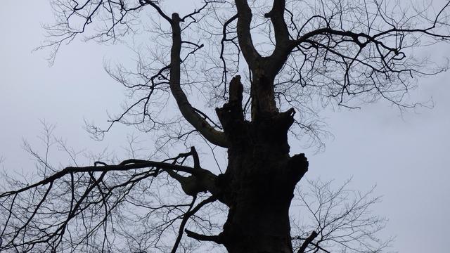 Burger Belangen wil overlast van bomen Raalte in kaart brengen