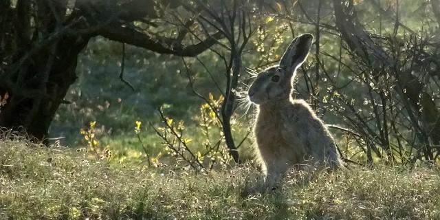 Veertig kilometer nieuwe natuur tussen Brabantse steden