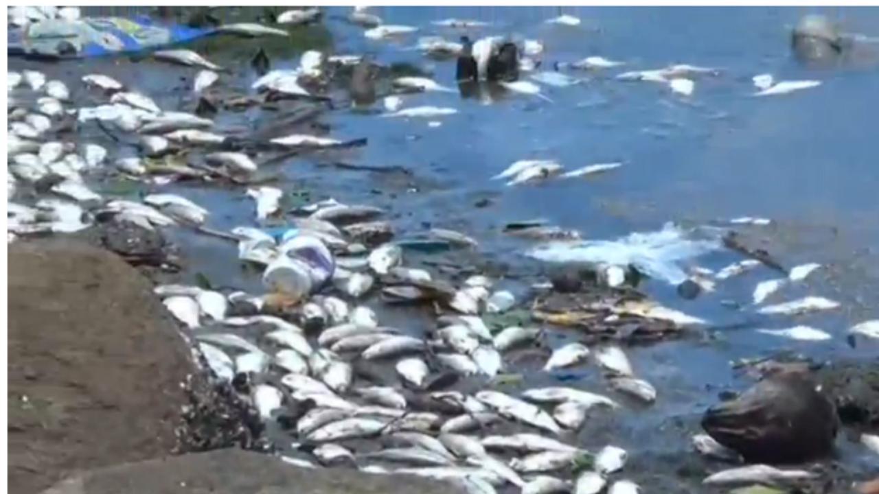 Duizenden vissen spoelen aan in Rio de Janeiro