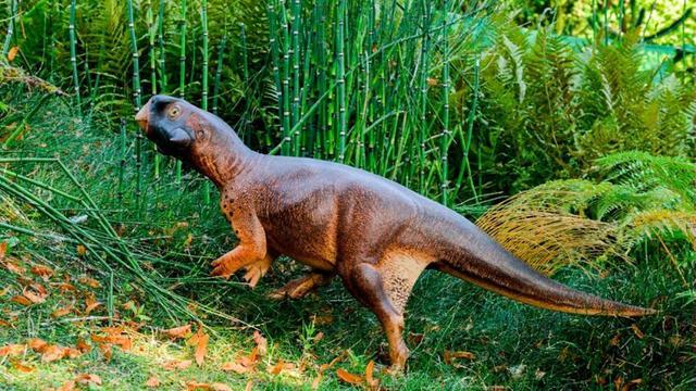 Schutkleuren van dinosaurus met snavel gereconstrueerd