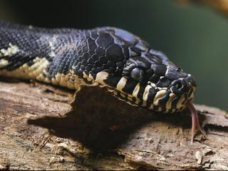 Politie vond de slang bij een inval in een drugslab