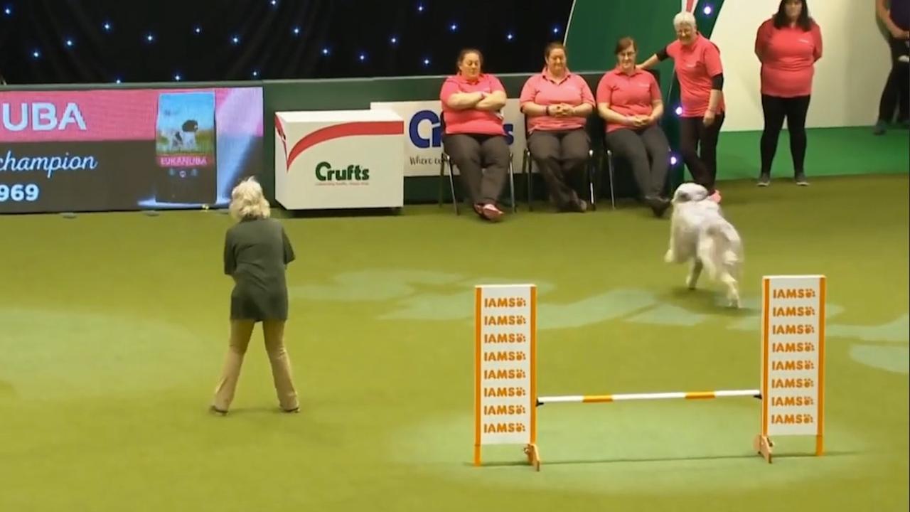 Eigenwijze hond steelt show op hindernisbaan