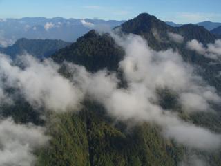 Bomen van 40 meter groeien op 3000 meter hoogte