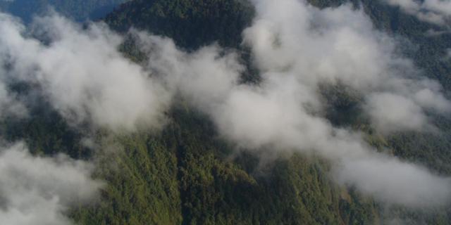 Bomen van recordhoogte ontdekt in berggebied Papoea-Nieuw-Guinea