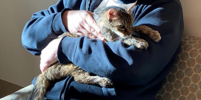 Man in VS na vijftien jaar herenigd met kat die niet meer thuiskwam