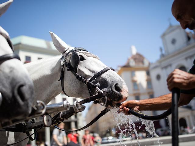 Zes gewonden door losgeslagen paarden in Burgh-Haamstede