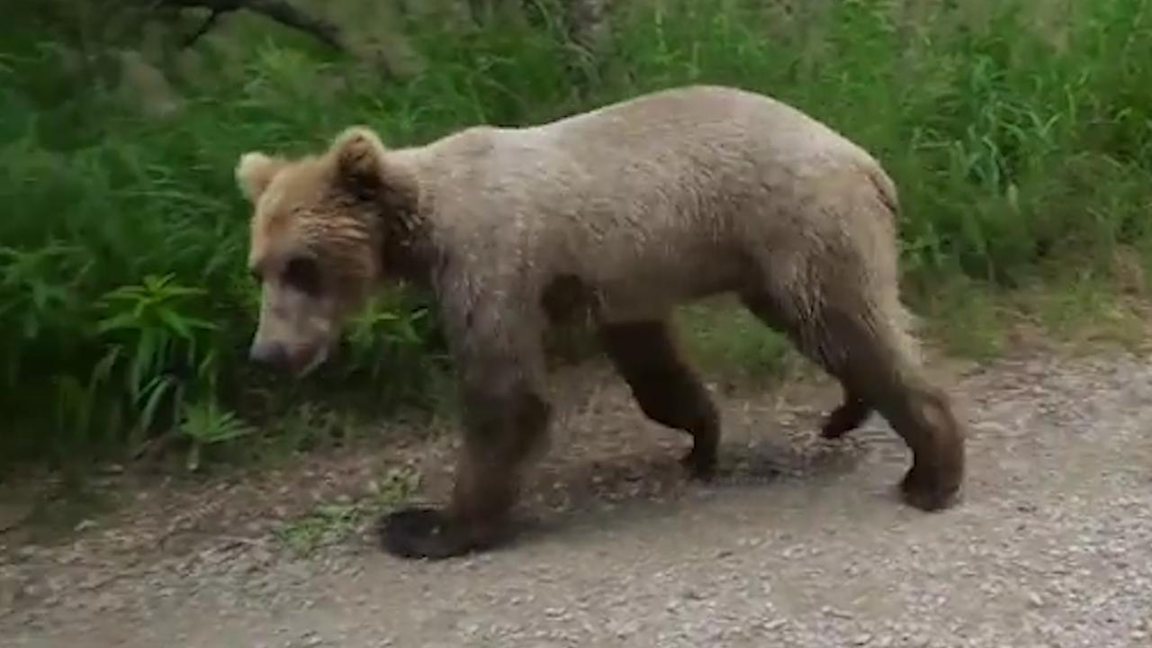 Jonge beer passeert stel op enkele meters afstand in Alaska