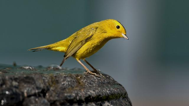 Meer dan tweehonderd vogels gestolen bij show in Nuenen