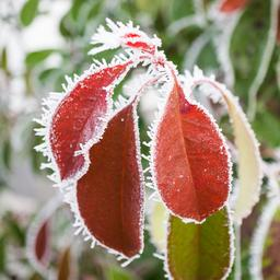 Zo help je kwetsbare planten in je tuin de winter door