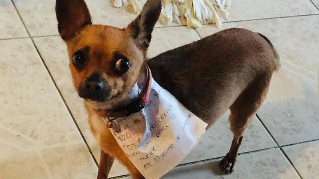 In Mexico haalt hondje zak chips voor haar baas die thuiszit
