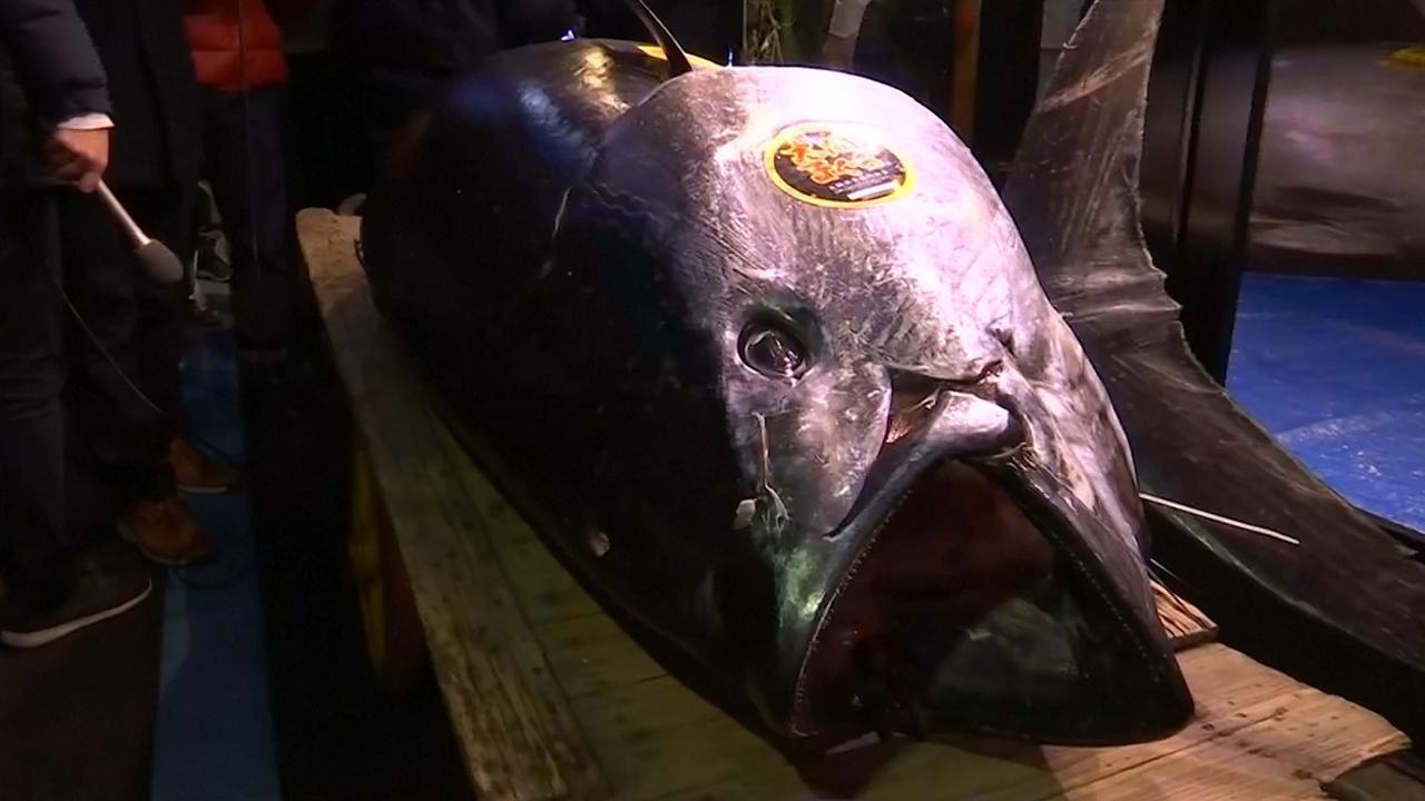 Japanner koopt tonijn voor recordbedrag van 2,7 miljoen euro
