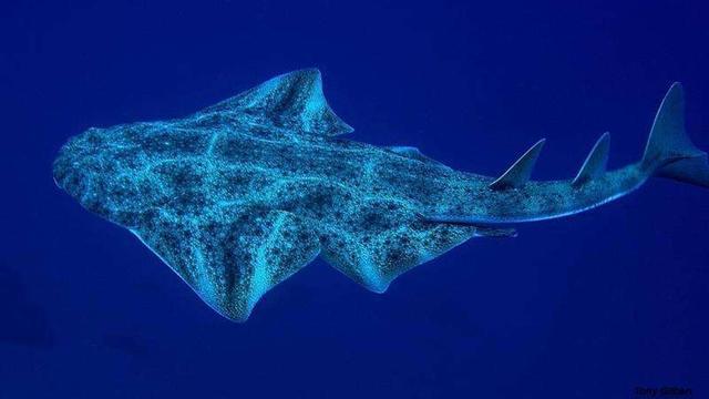 Grootste vissoorten in Europa ernstig bedreigd door overbevissing