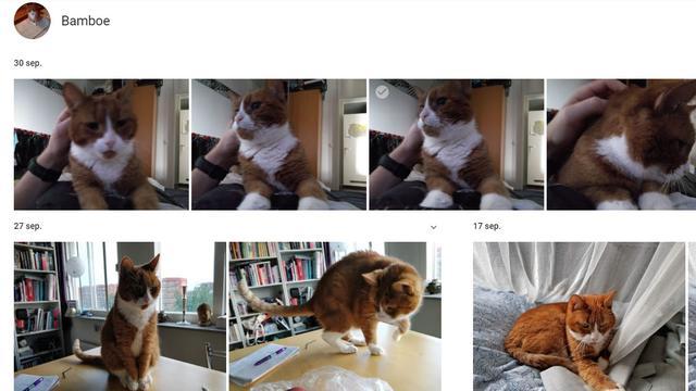 Google herkent automatisch huisdieren in foto-app