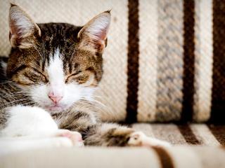 Kat viel naast de drugs in slaap