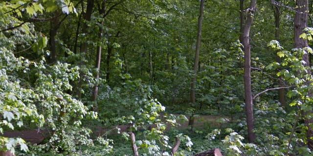 Rotterdam sluit toegangswegen Kralingse Bos af vanwege drukte