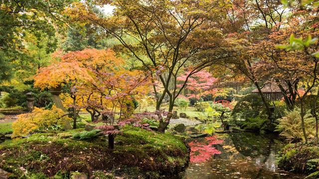 Japanse Tuin in landgoed Clingendael gaat op 12 oktober weer open